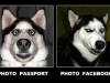photo-passport-facebook