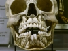 childs-skull-before-losing-baby-teeth